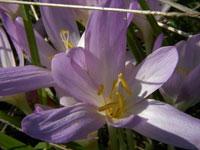 Blumen Quiz