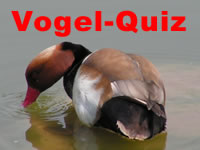 Vogel Quiz